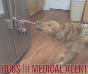 Medical Alert dogs trained to assist People with diabetes, seizures etc| Animals Deserve Better|Paws for Life Georgia