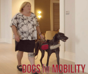 Service Dogs trained to assist People with Autism | Animals Deserve Better|Paws for Life Georgia