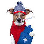 adb IMAGE dog emergency with hat on
