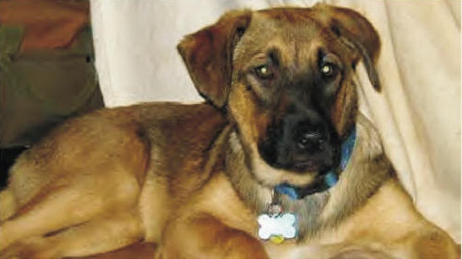 adb IMAGE shepard for education keep dogs out of shelters page