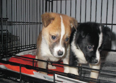 adb IMAGE two puppies for educaiton keep dogs out of shelters page