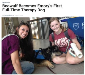 Beawulf, a rescue dog from Animals Deserve Better In Marrietta Georgia becomes Emory's first Full Time Therapy Dog