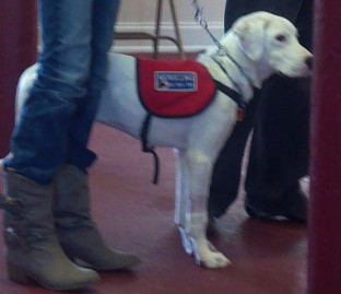 Life with a Service Dog- Animals Deserve Better