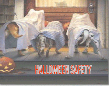 Animals Deserve Better|Paws for Life Service Dog Training Shares Tips on Dog Safety for Halloween
