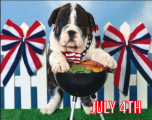 Animals Deserve Better|Paws for Life Service Dog Training Shares Tips on Dog Safety for July 4th