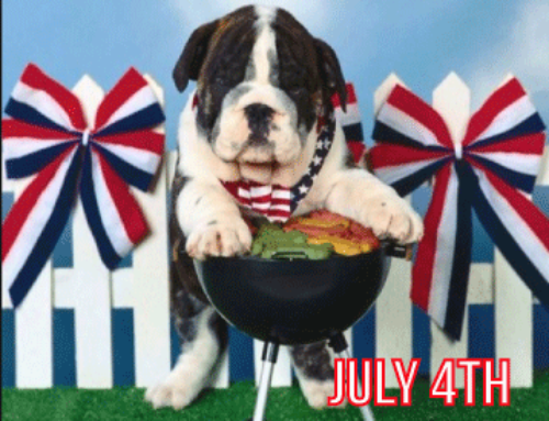 7 Tips To Keep Your Service Dog Safe for July 4th