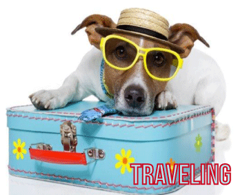 Animals Deserve Better|Paws for Life Service Dog Training Shares Tips on Dog Safety for Traveling