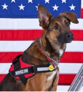 Animals Deserve Better  Paws for Life July 4th Dog Safety