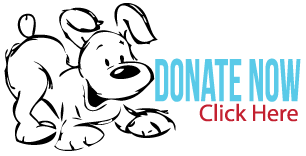 Donate Now to Animals Deserve Better|Paws for Life,  Marietta Georgia