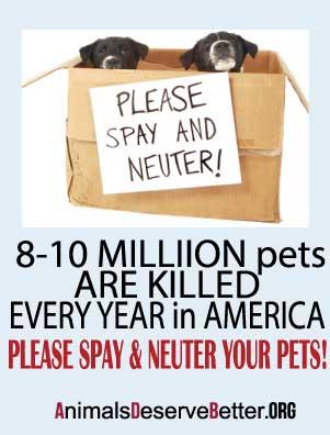 Animals Deserve Better Dog rescue Marietta Georgia Spay & Neuter