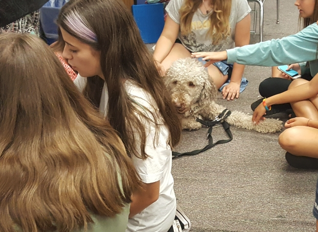 Paws for life Therapy Dog Program, Animals Deserve Bett