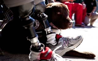 VA VA Announces New Rules Regarding Service Animals in VA Facilities| Animals Deserve Better-Paws for Life Georgia