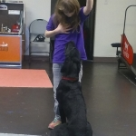 Alivia working with Spartan Donate to a dog team