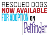 Animals Deserve Better Rescue Dogs Available