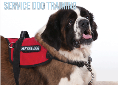 Wag It Better Dog Training
