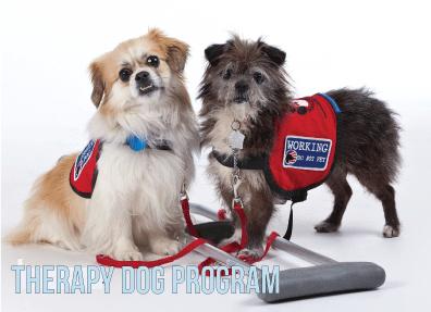 Service Dog Training Roswell Ga