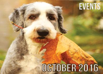 Animals Deserve Better | Paws for Life Service Dog Training Georgia
