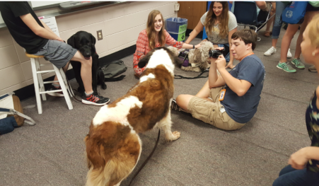 Pictured is ADB's eight year old Saint Bernard Therapy Dog Simon. . (ok, well his back!)