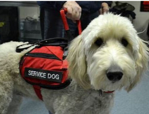COVID-19 and your Service Animal