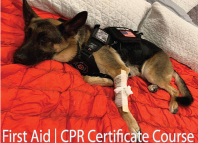 Paws for Life USA First Aid & CPR Certificate Course